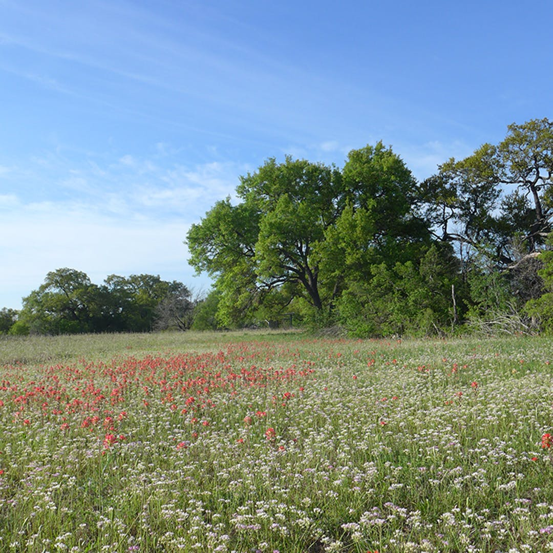 John Trevino Jr. Metropolitan Park at Morrison Ranch has beautiful oak groves and wild meadows.