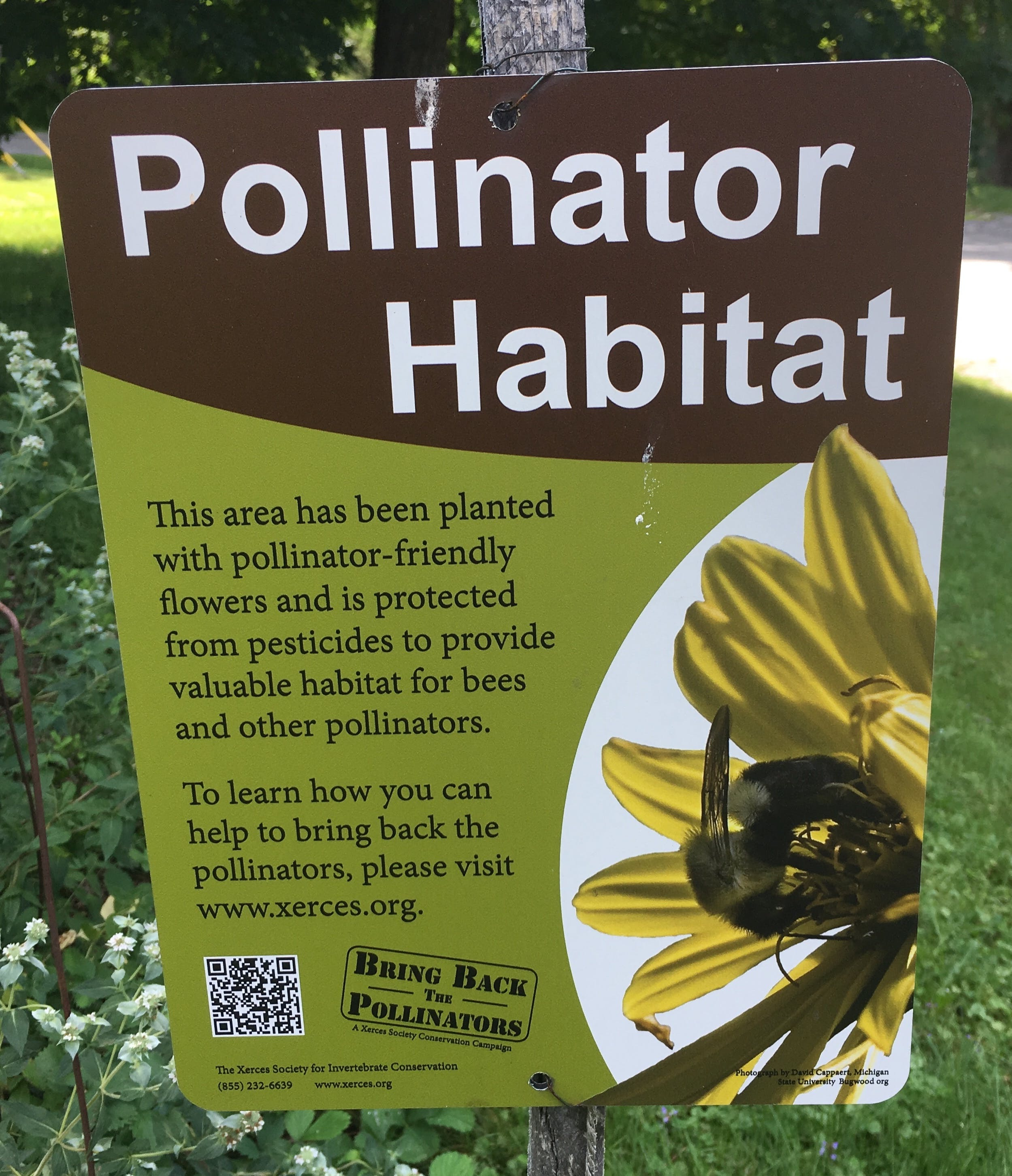 Learn more about pollinators at Xerces.org