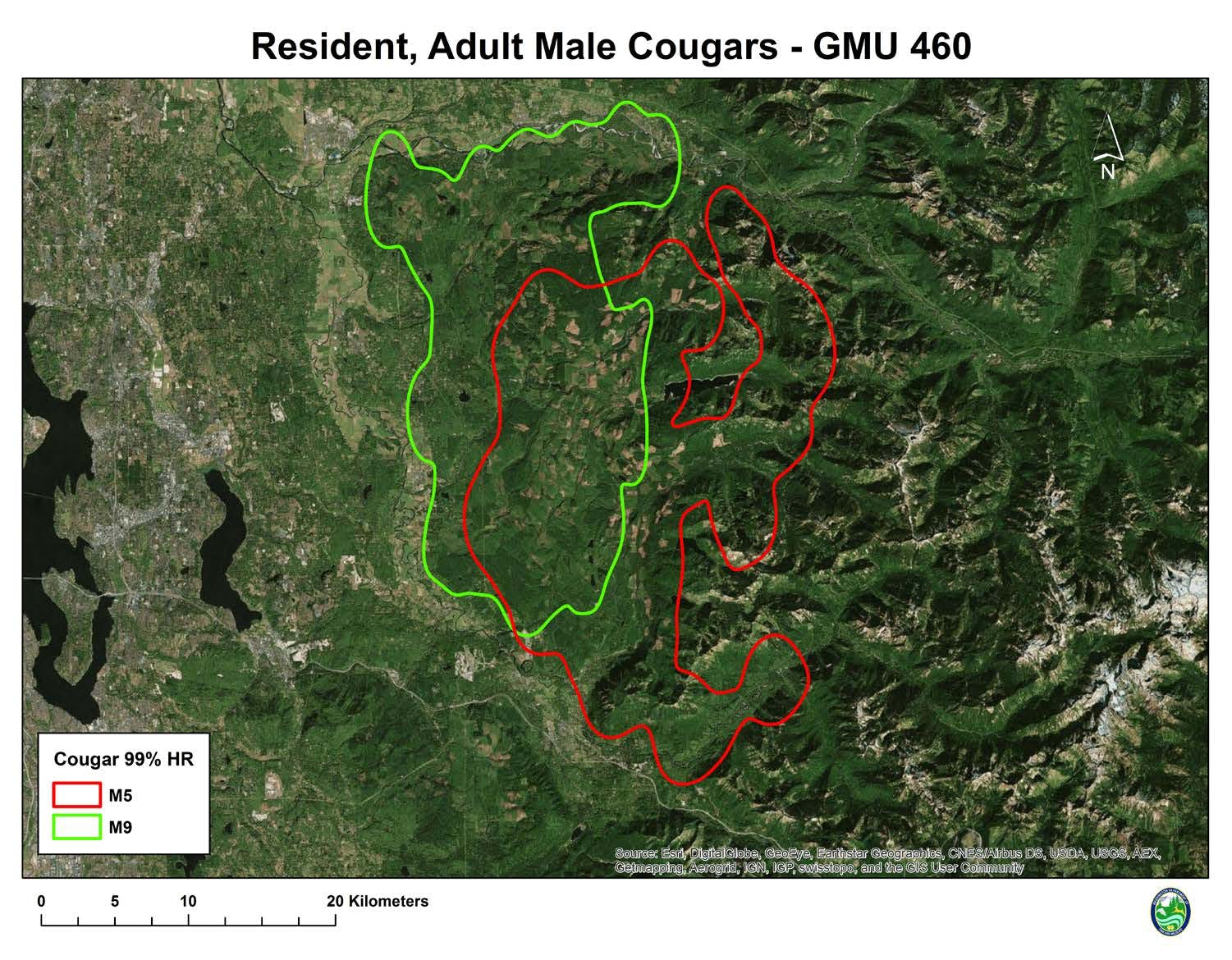 Male Cougar Territory