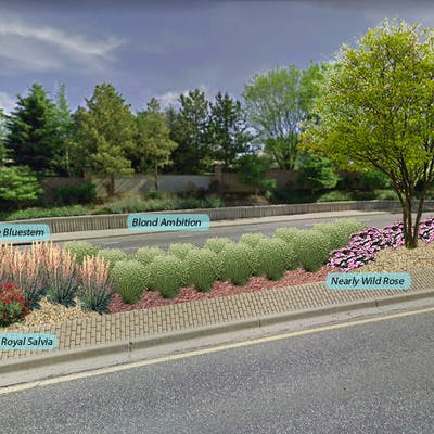 Belleview Median Sample Plant Selections