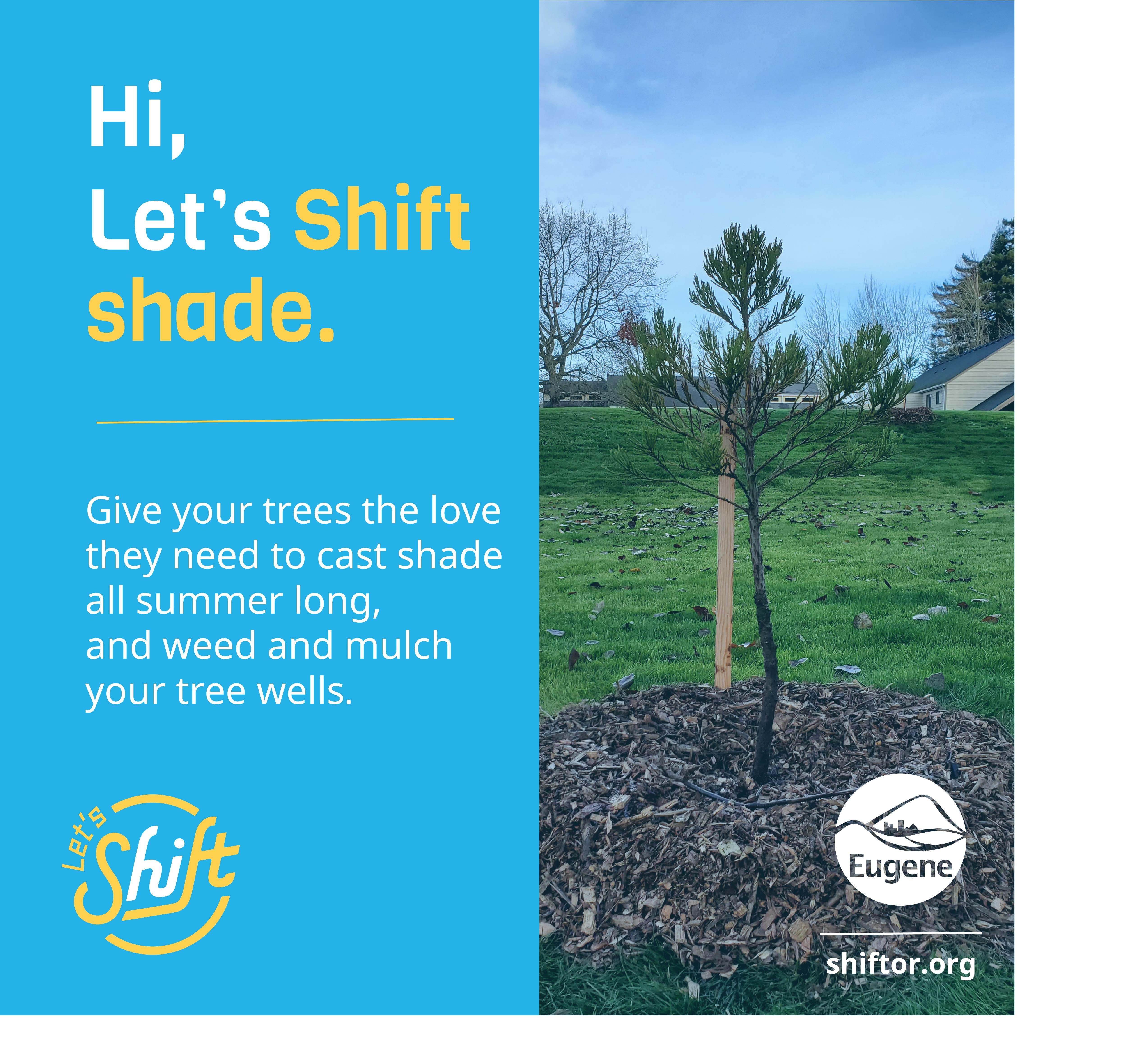 Shift_social-IG Tree Wells.jpg