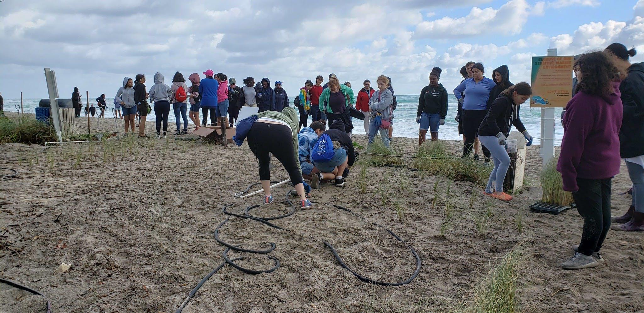 Beach Dune Planting 2020