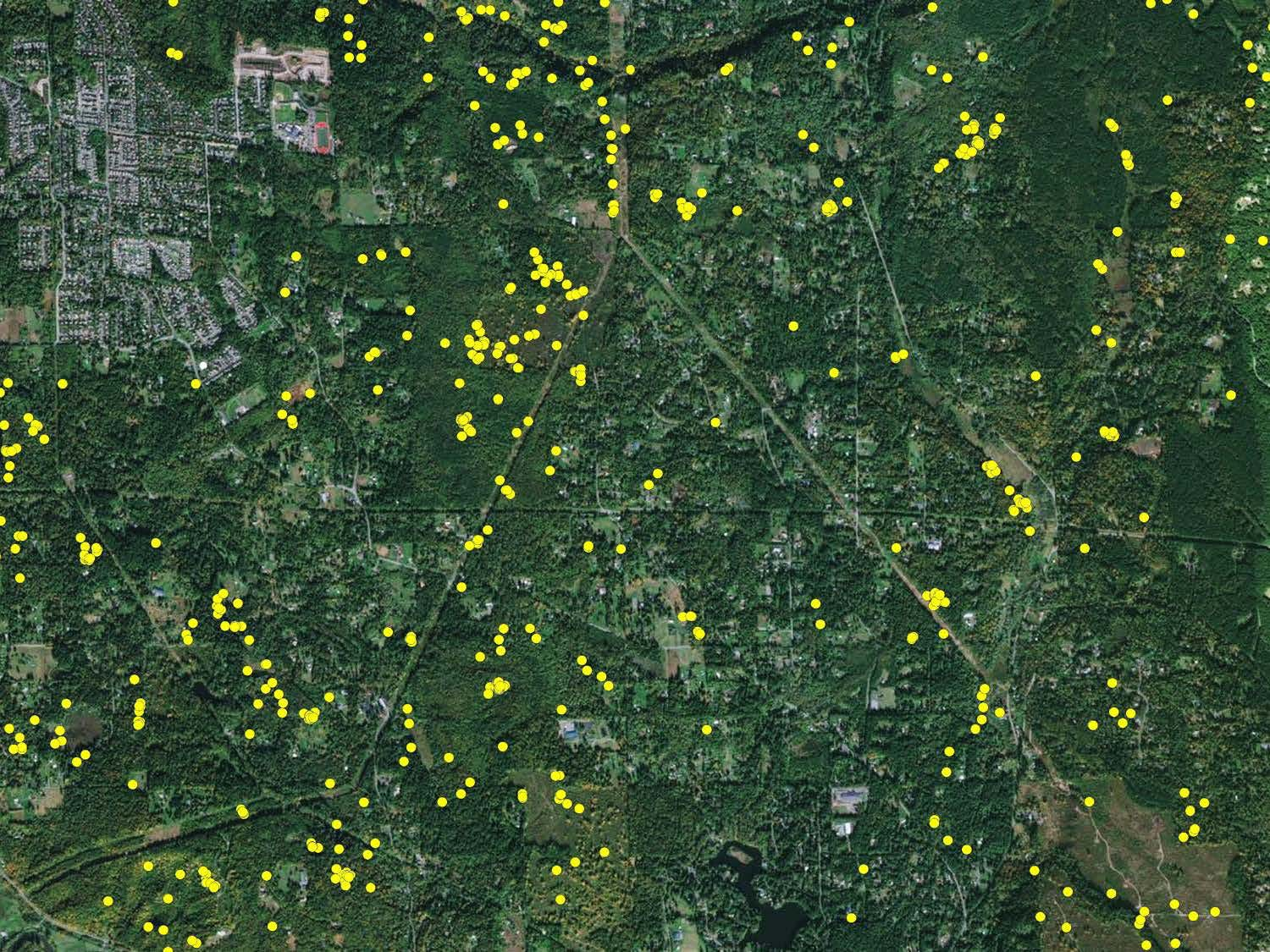 GPS Map of Female Cougar in Duvall Area