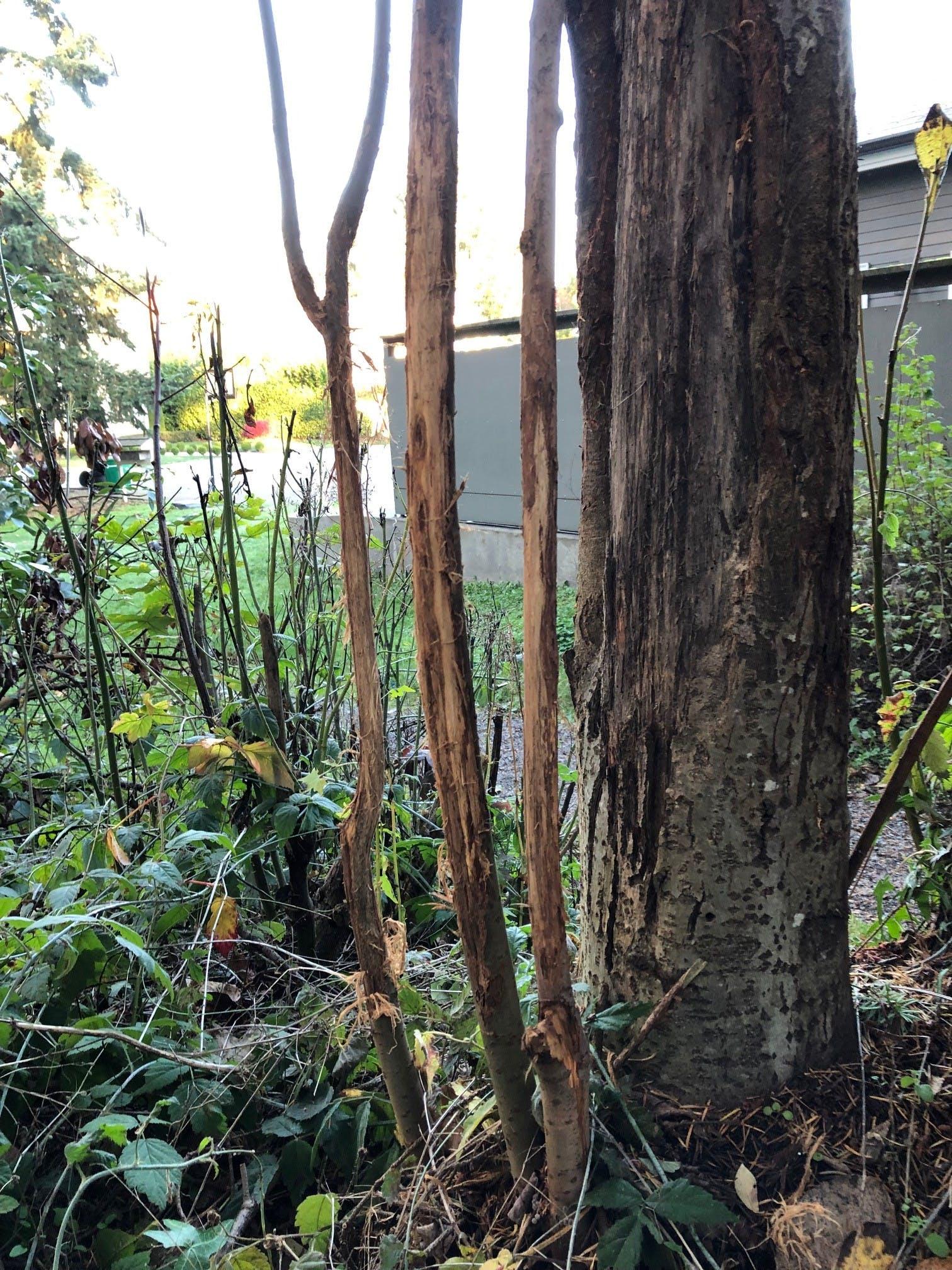 Wildwood Tree2
