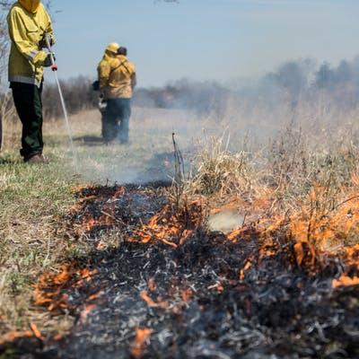 Crow-Hassan prairie burn management