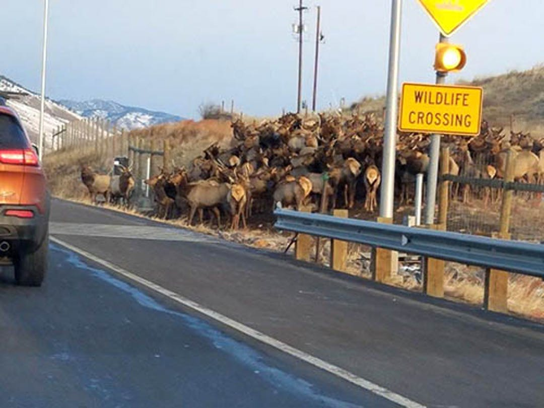 Wildlife Crossing on US6