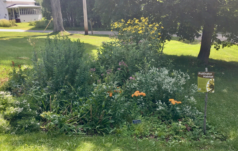 Jericho Center Pollinator Garden - August in Bloom