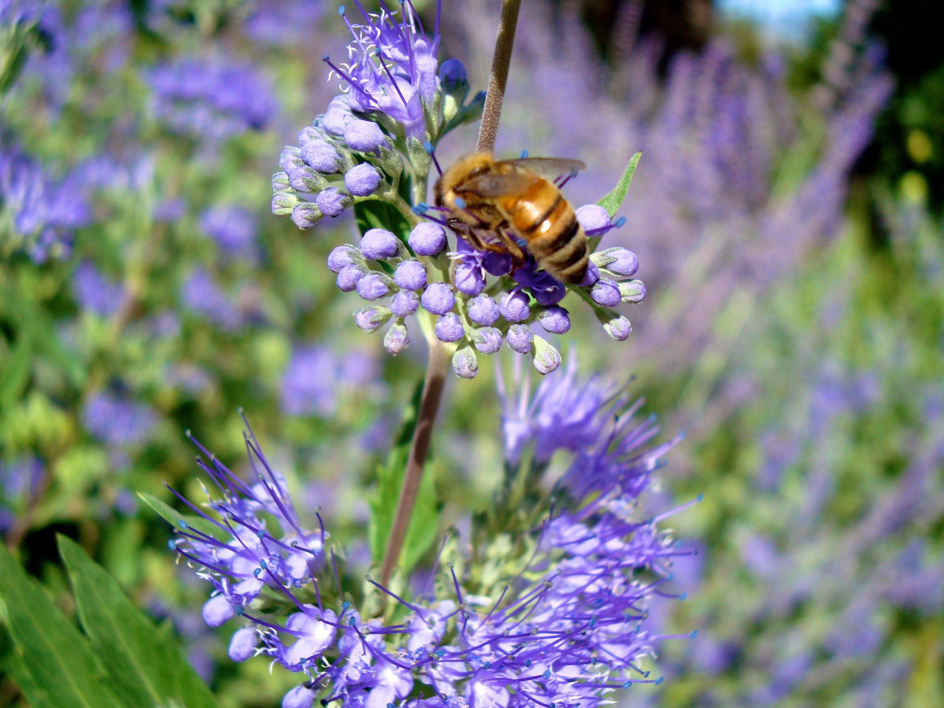 Bee & Purple Flower