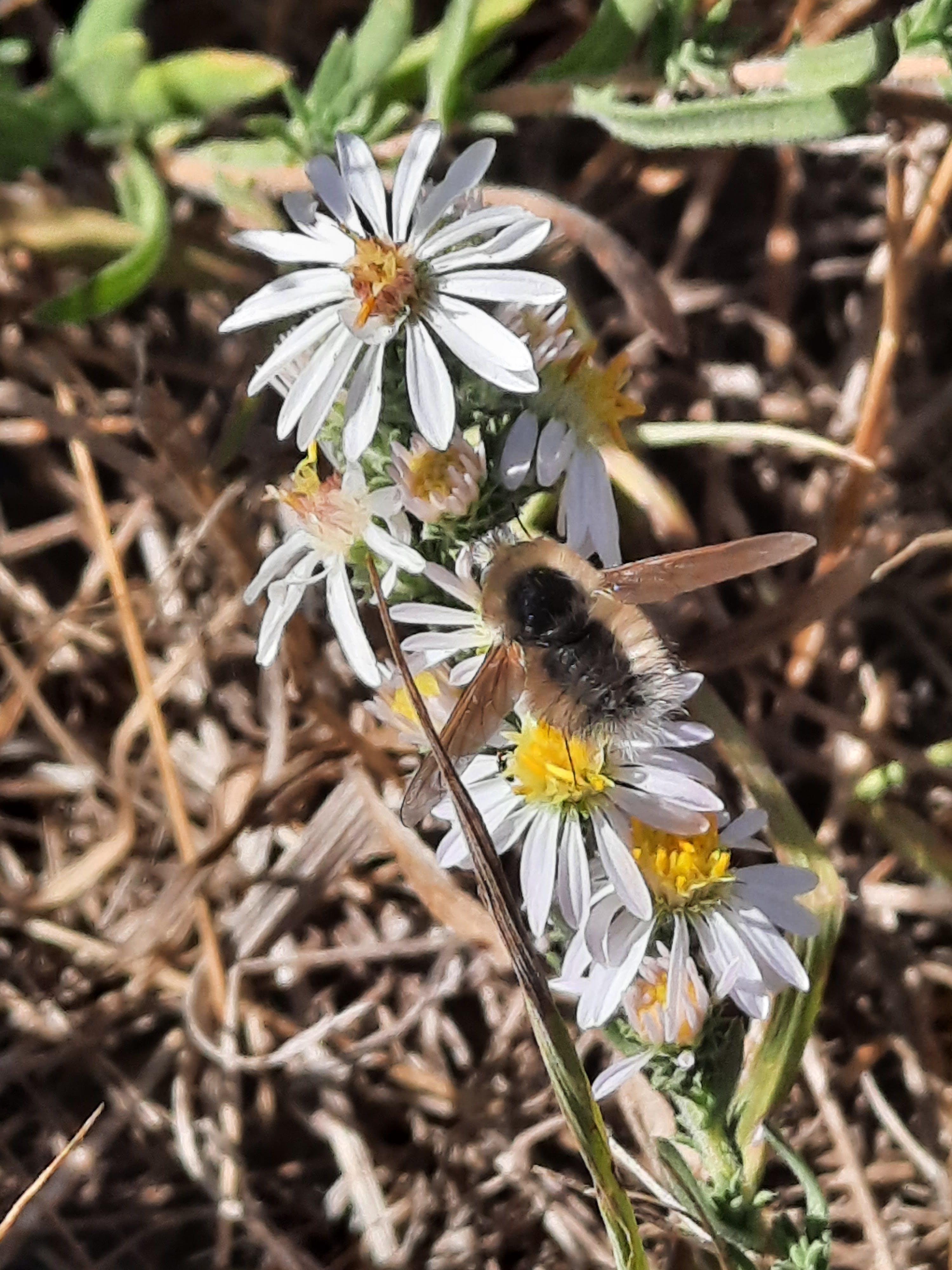 White Flowers & Bee