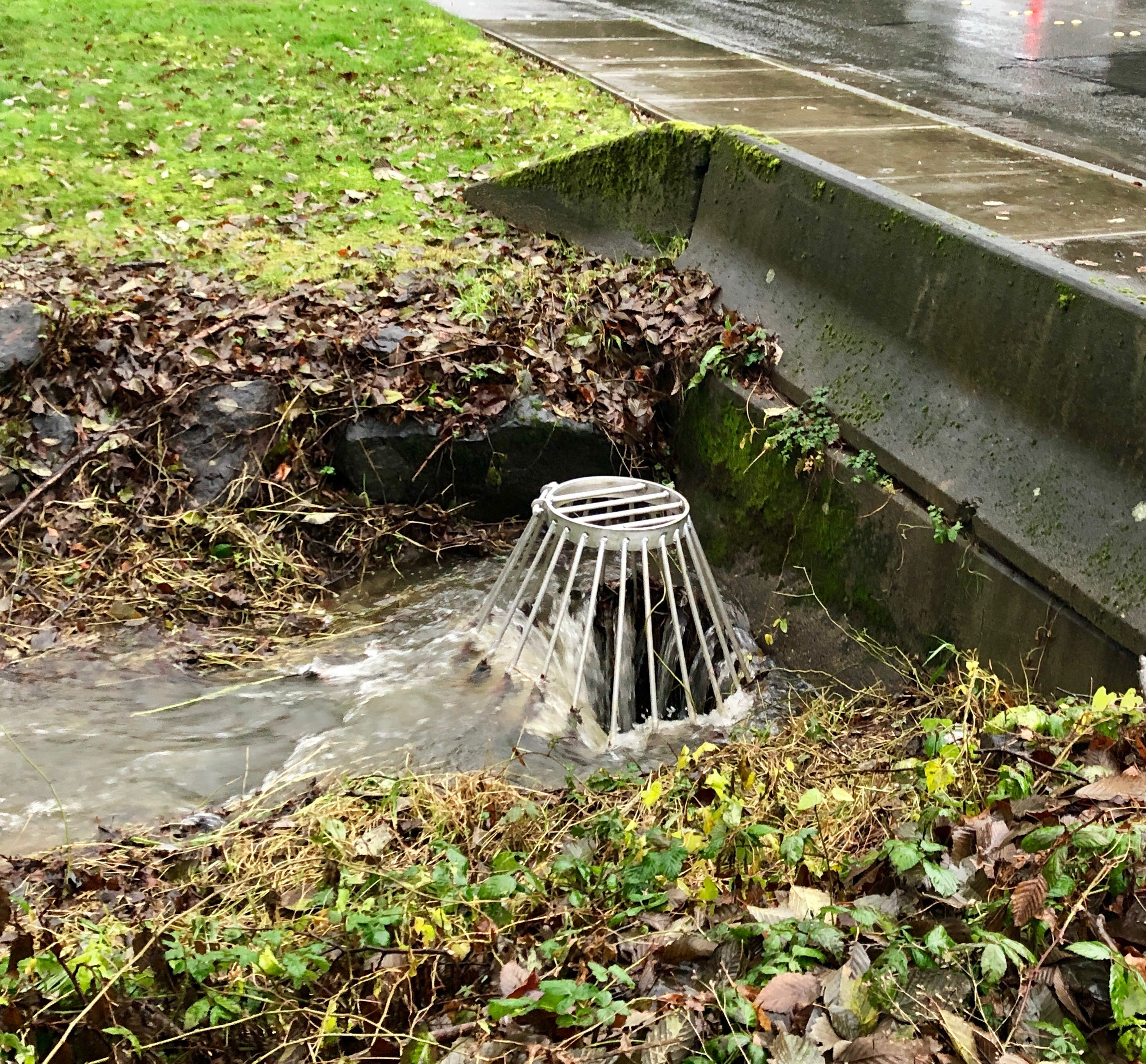 Please Help Clear Local Storm Drains When Safe!