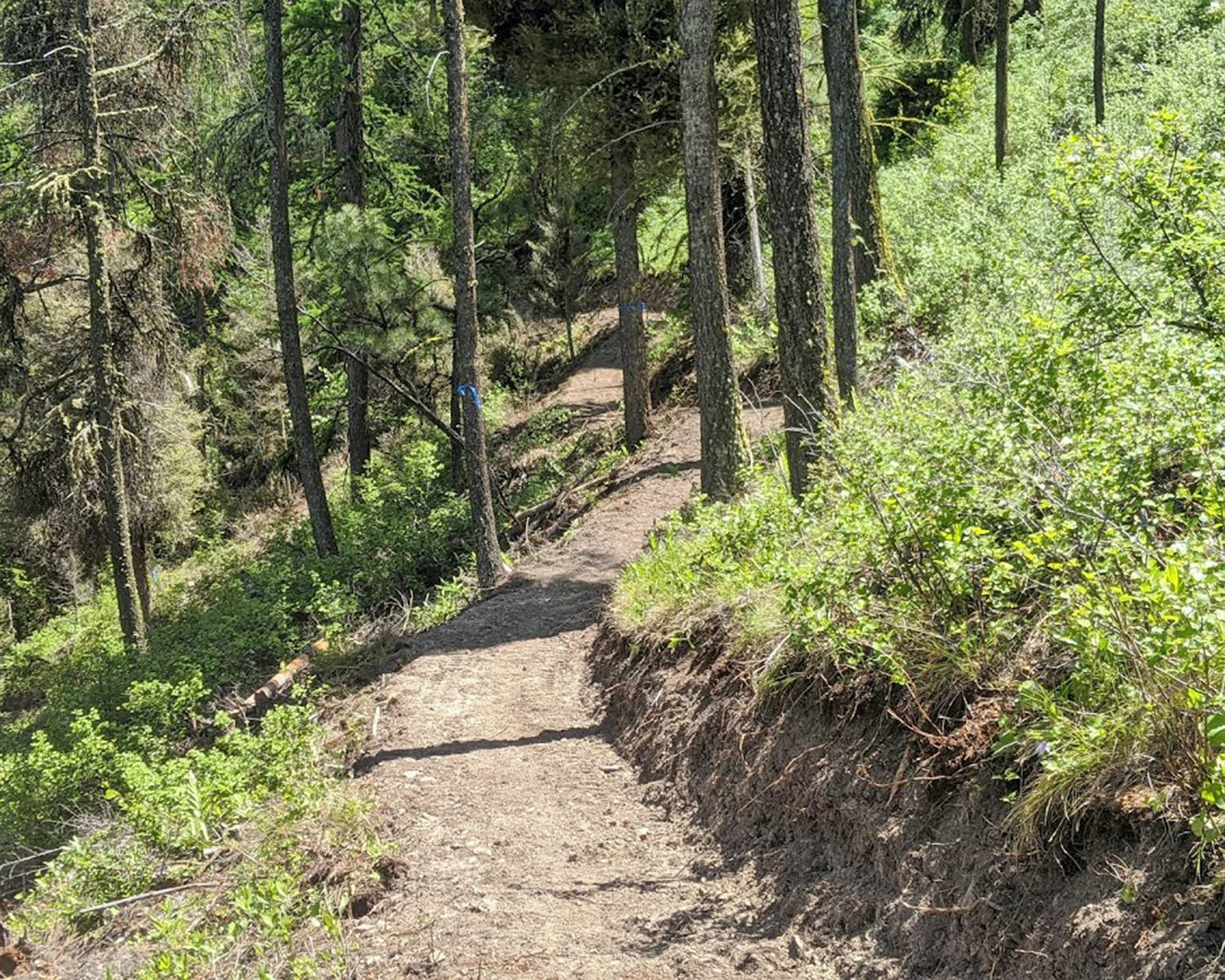 Broadly accessible trail_by Brian Williams_courtesy of Five Valleys.jpg