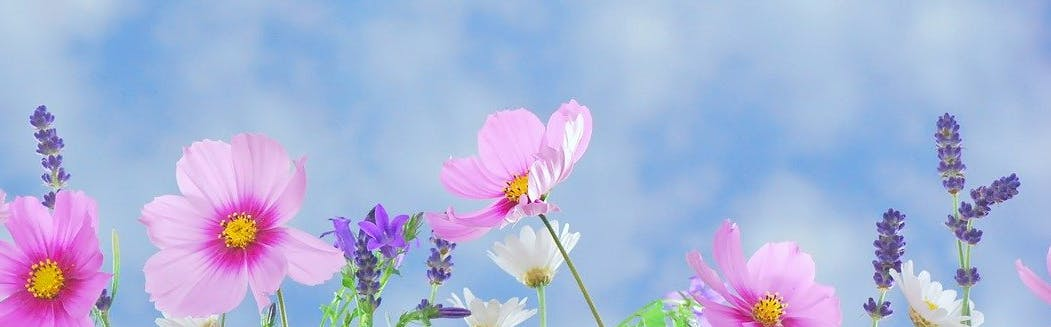 wildflowers against a blue sky