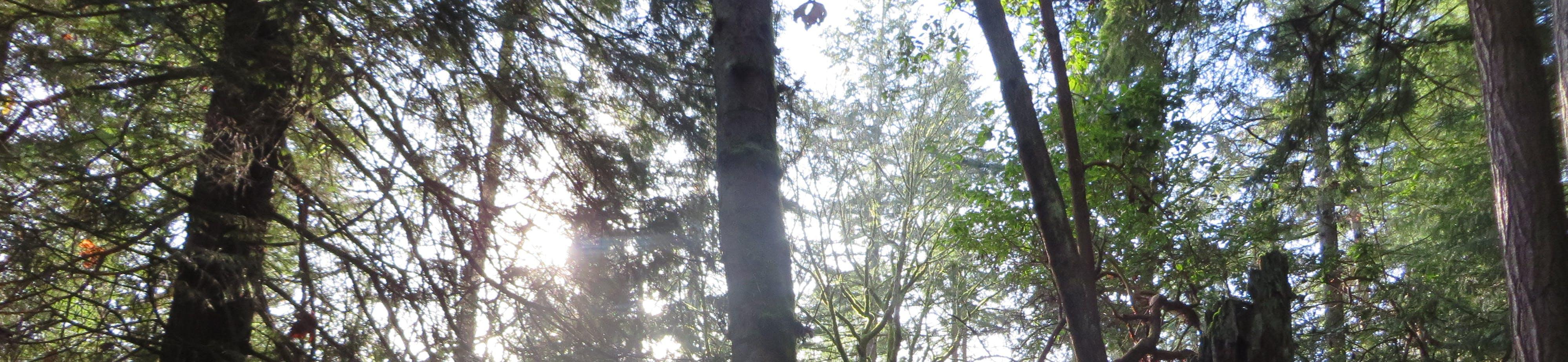 Trees of Bellevue