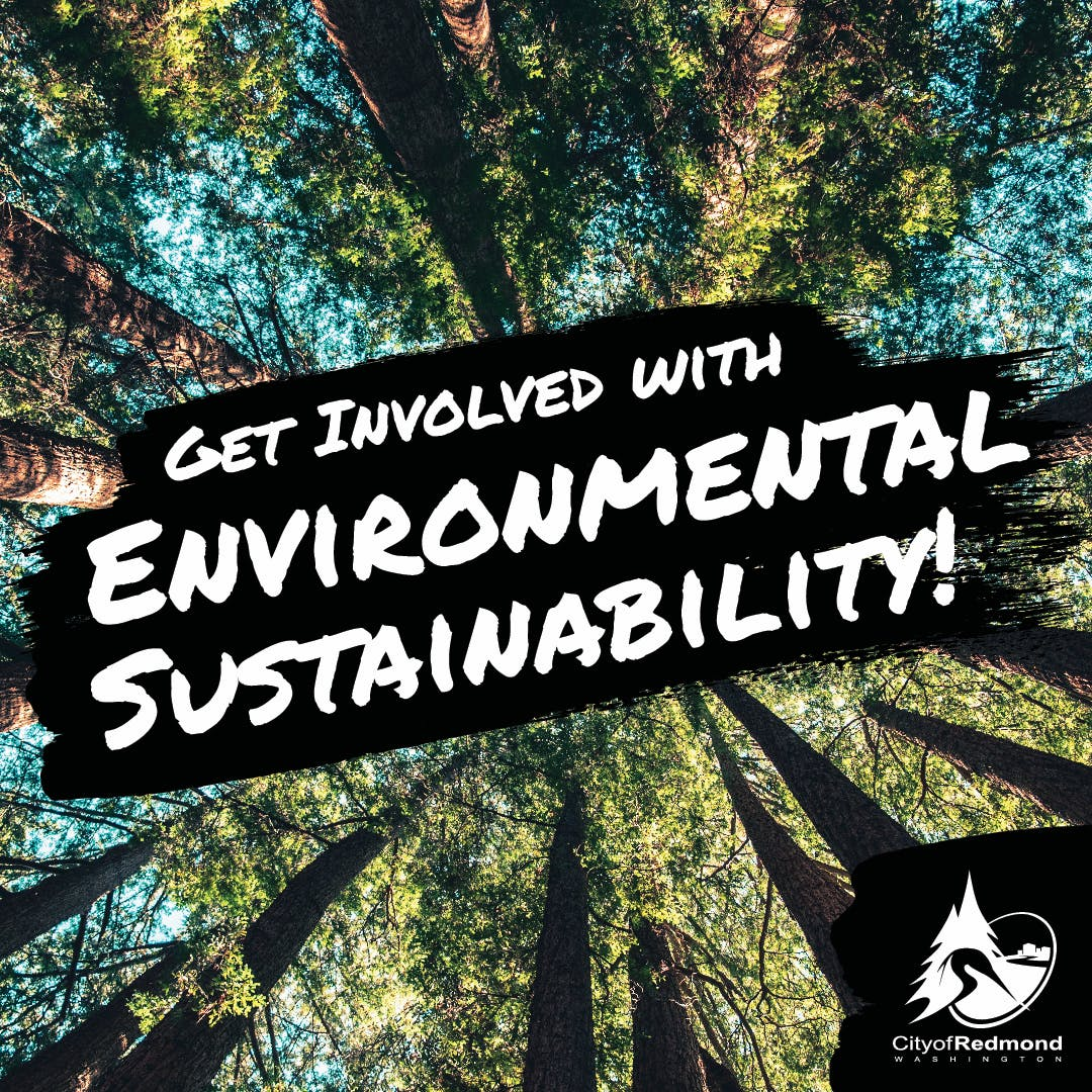Get involved with Environmental Sustainability