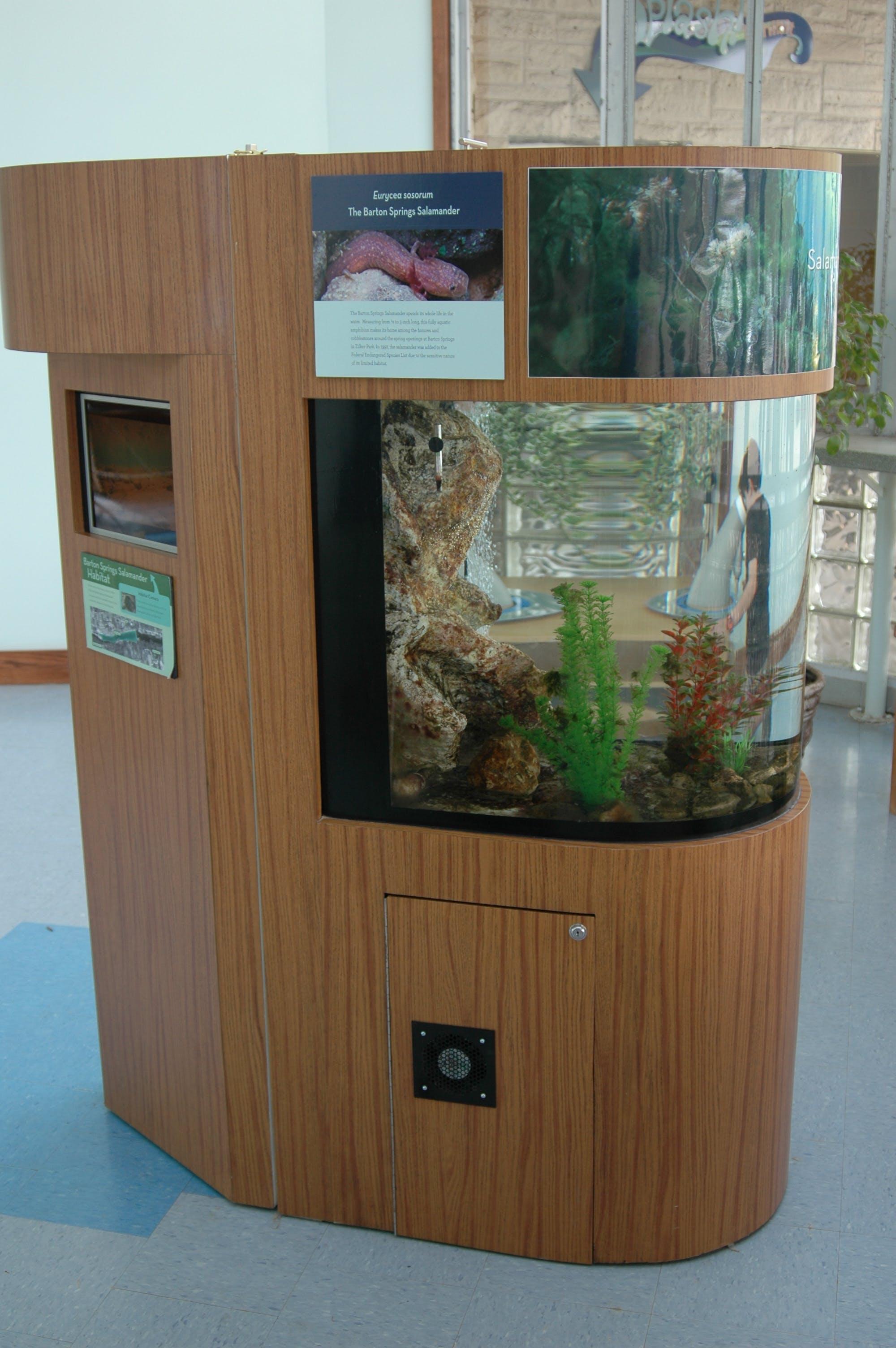 Salamander tank