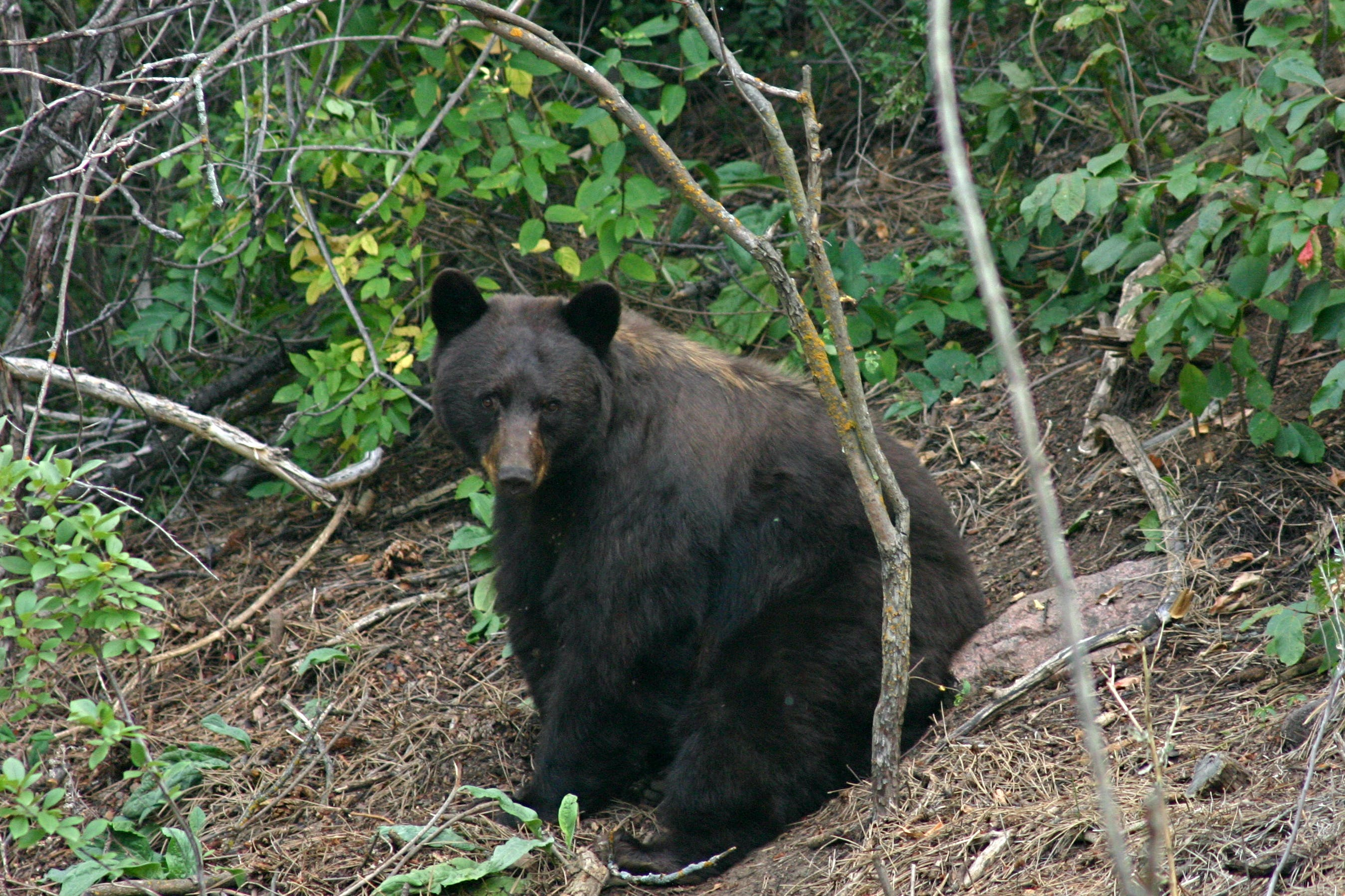 bear-photo