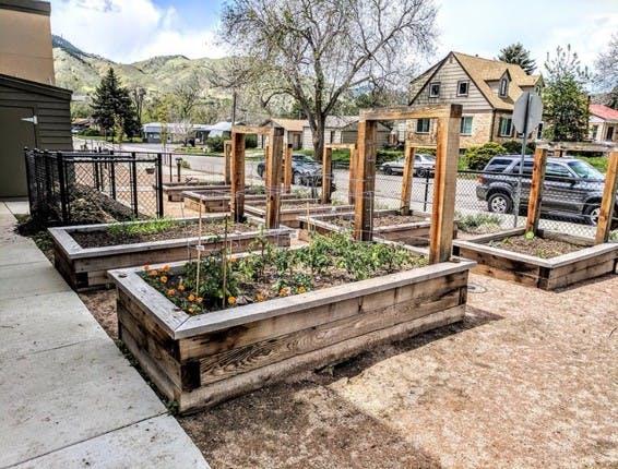 Natural Grocer's Community Garden